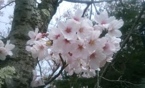 16-04-03-10-51-37-375_photo