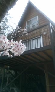 16-04-03-10-52-27-782_photo